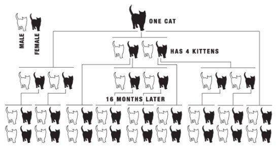 Cat overpopulation image